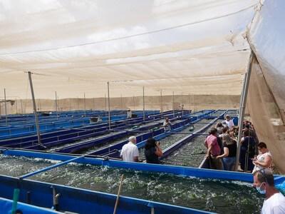 חוות אצות ים, חממת גידול גדולה