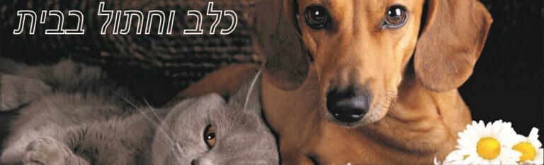 כלב וחתול, חברים או אויבים?