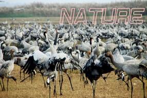 טבע, צילום ציפורים באגם החולה