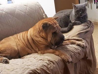 כלב וחתול יושבים על ספה