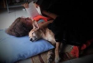 ילדה מקריאה סיפור לכלב ישן