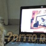 האם כלבים וחתולים אוהבים לצפות בסדרות? 🐺🐶