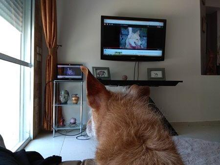 כלב רואה כלב בטלויזיה