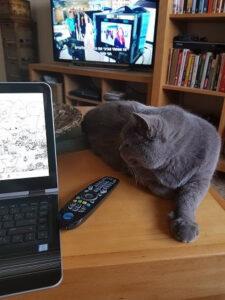 חתול מסתכל על מחשב נייד