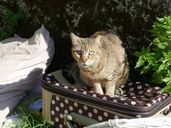 חתולי קהילה \חתולי רחוב נשארים ללא מקום לחיות בו כאשר האזור מפונה ונהרס