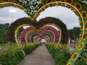 dubai miracle garden גן מדהים של מיצגים עם פרחים