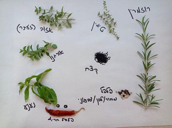 רשימת צמחים ותבלינים להכנת שמן זית משובח ומתובל, מתכון