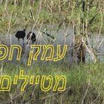 מקומות לטיולים בטבע – עמק חפר חלק ב'