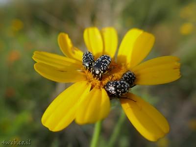 מקומות לטייל, פרחים וצילום טבע בארץ. איפה כדאי לטייל קרוב לבית?