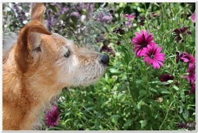 התנדבות עם בעלי חיים. כלבים וחתולים