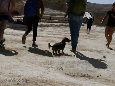 נחל פרס קל להליכה לבני אדם, כלבים ובעלי חיים
