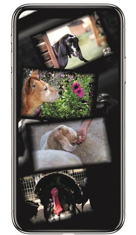תמונות של התנדבות עם בעלי חיים בטלפון