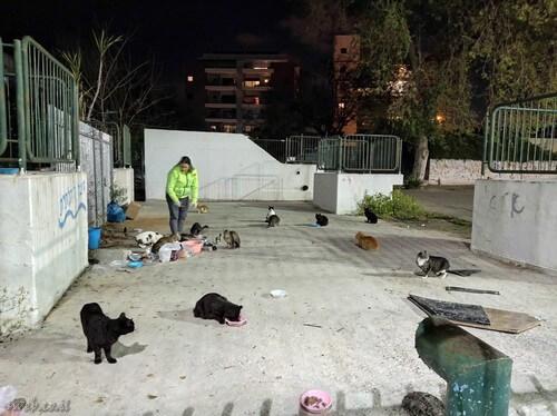 חתולים שגרים במתחם פינוי בינוי, האכלה מחוץ לשטח