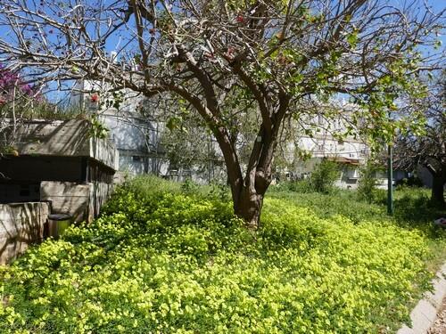 עונת קינון הציפורים שחלה באביב, פריחה ולבלוב, בנינים ישנים