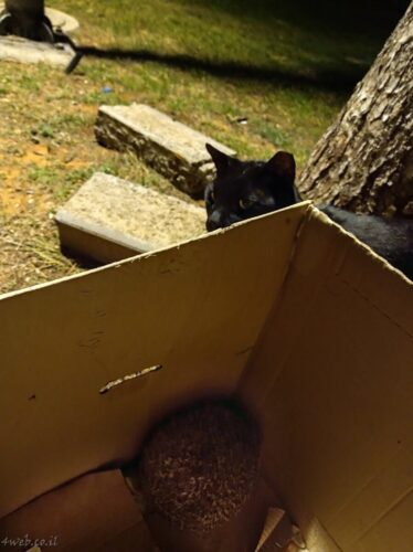 קיפודים מגיעים לתחנות האכלת חתולי רחוב. האכלת חתולים מזיקה לקיפודים