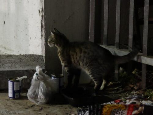 פינוי בינוי קיפודים. מה קיפודים אוכלים? האכלת חתולי רחוב