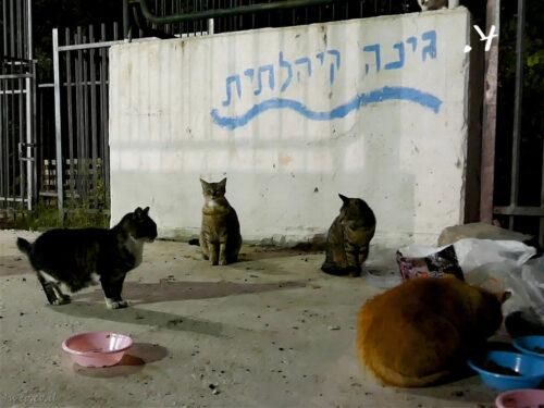 האכלת חתולי רחוב, התחדשות עירונית לחתולים