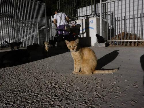 האכלת חתולי רחוב, התחדשות עירונית לחתולי רחוב