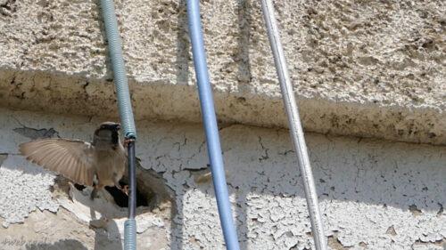 חיות בעיר, איפה יש קיני ציפורים בנין להריסה
