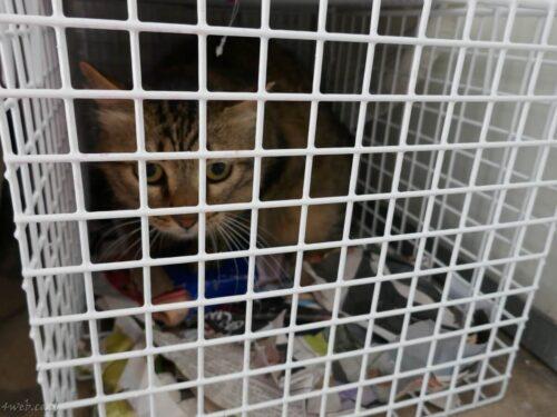 """חתולי רחוב הועברו לפנסיון לחתולים, בתמיכת יזמות נדל""""ן של התחדשות עירונית 3"""