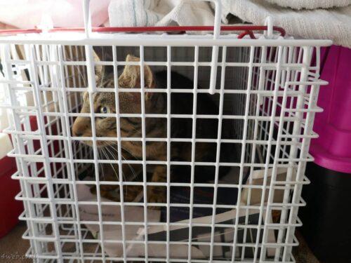 """חתולי רחוב הועברו לפנסיון לחתולים, בתמיכת יזמות נדל""""ן של התחדשות עירונית 2"""