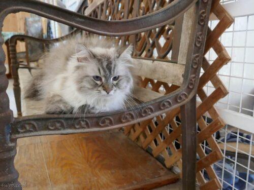 """חתולי רחוב הועברו לפנסיון לחתולים, בתמיכת יזמות נדל""""ן של התחדשות עירונית 1"""