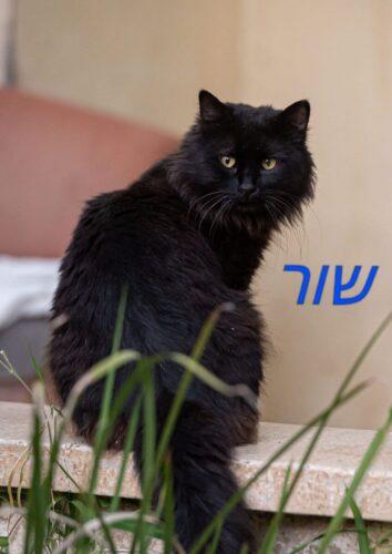 חתולי רחוב פינוי בינוי, שור. מתנדבים שומרים על החתולים