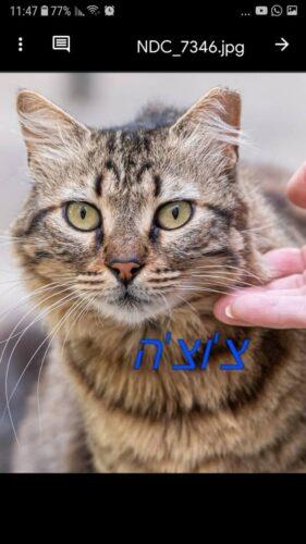חתולי רחוב פינוי בינוי, צוצה. מתנדבים שומרים על החתולים