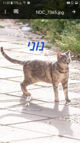 חתולי רחוב פינוי בינוי, נוני. האכלת חתולי רחוב ושמירה על חיות העיר