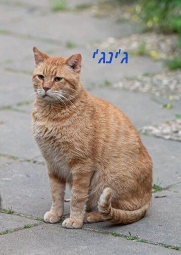 חתולי רחוב פינוי בינוי, ג'ינג'י. האכלת חתולי רחוב ושמירה על חיות העיר