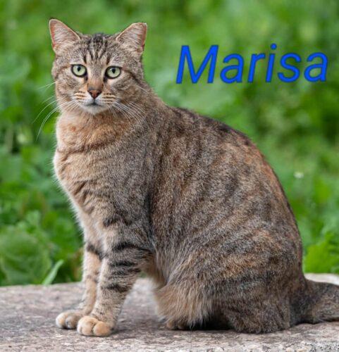 חתולי רחוב פינוי בינוי, מריסה. מתנדבים שומרים על החתולים