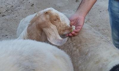 התנדבות עם בעלי חיים, חיות בית, חיות בר