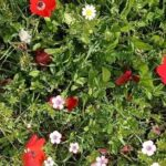 טיולי פריחה, תורמוסים, טבע ונוף – תל שוכה