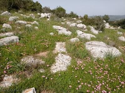 טיול קרוב לתל אביב ולירושלים. אטרקציות במרכז הם נופים, פריחה מדהימה ועתיקות