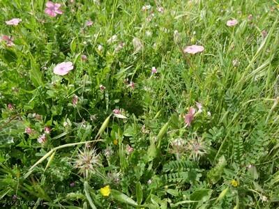 כדאי לצאת מהקופסא ולהנות מפריחה מדהימה שיש לנו בארץ. שימרו על הטבע והשאירו נקי ויפה