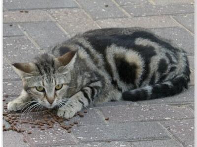 האכלת חתולי רחוב זו גם התנדבות. מה זה עושה לחתולים